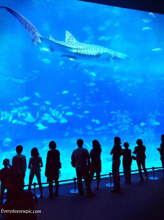 requin baleine okinawa
