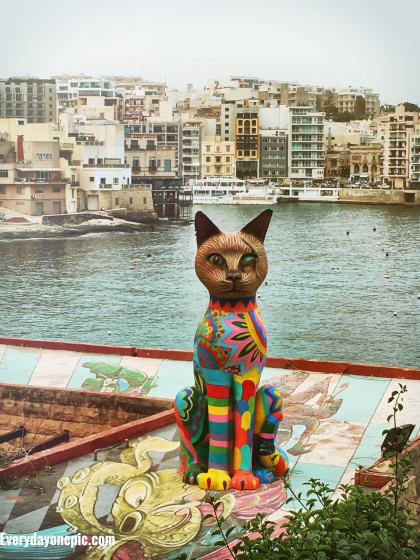Un chat vous regarde lorsque vous marchez sur le Strand
