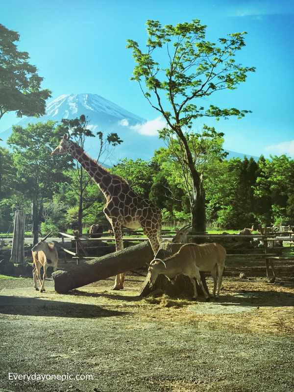 Safari parc Fuji