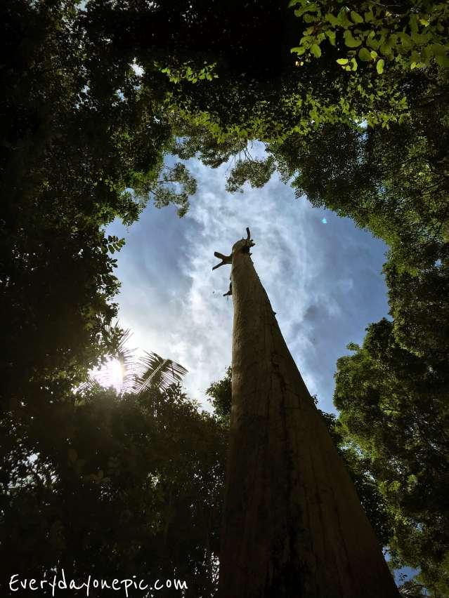arbre en foret